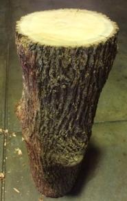 Take one Silky Oak Log
